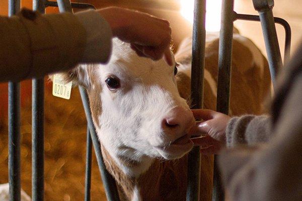 ביקור בחווה בסיור תרבות ווטעימות באינטרלקן