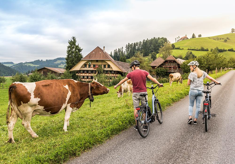 רוכבי אופניים מביטים בפרות באזור אמנטל