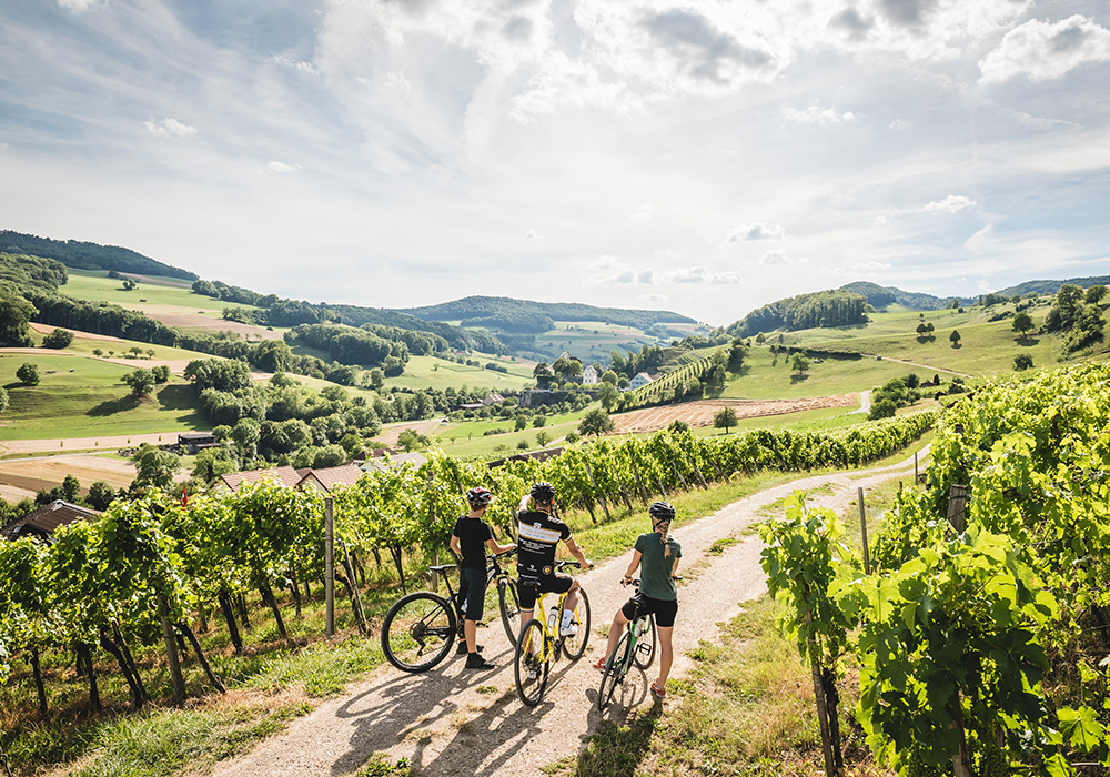 רוכבים באזור הכרמים בדרך היין