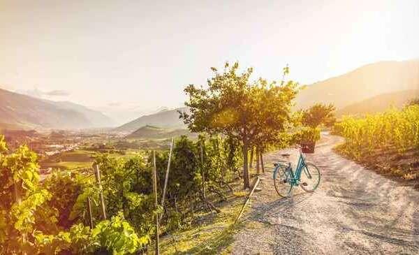 זוג אופניים חונה בכרם בדרך היין